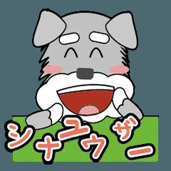 dogs dailylife