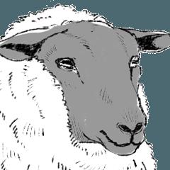 The 16 Sheep
