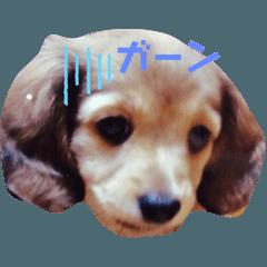 ducksmomo_20200113214734