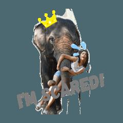 elephantmood