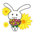 Happy rabbit Usako
