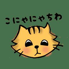 猫のポン助