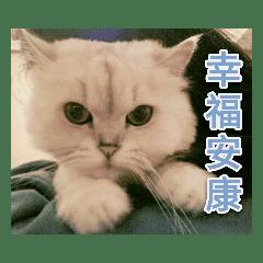 Yijay Lee_20200114153527