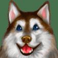 Siberian Love Husky