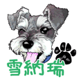 Miniature Schnauzer Chinese Simplified