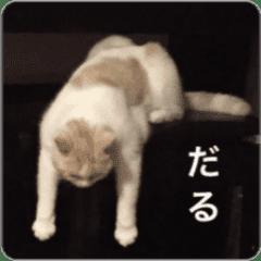 猫だってなかなか忙しい