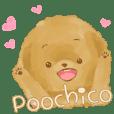 Poochico(toypoodle)