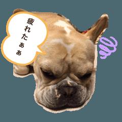 Sachi-BULL_20200117112922