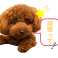 Momo chan stickers 3