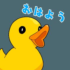 Bathing duck tekuchan