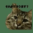 猫太郎とゆかいな仲間たち
