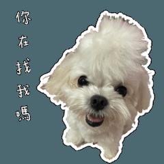 Miss Animal's Soulmate ru