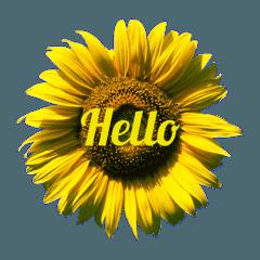 Hello22_20200120153353