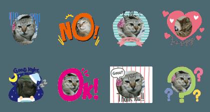My cat mine