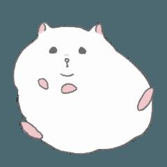 A hamster named Haku.