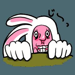 Mr.Rabbit!