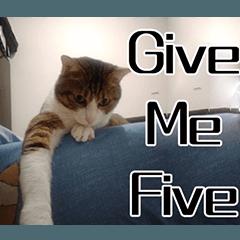 GREY'S CAT