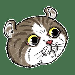猫の気分 ( 03 )