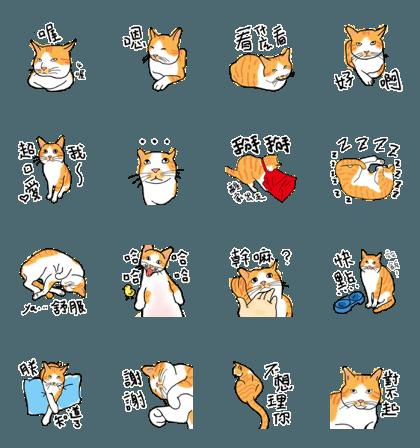 Orange cat super cute