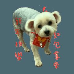 小可愛狗狗Lucky 2