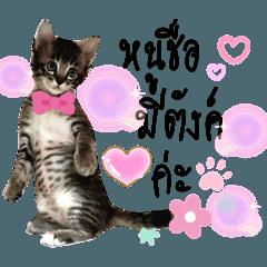 Meetang - Thai Cat