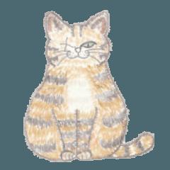 Stray Cat Ponsuke