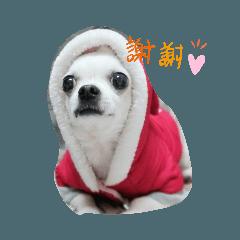 cute dog BO BO