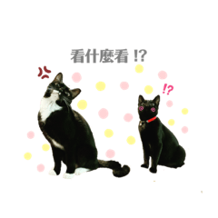 雙貓初任務