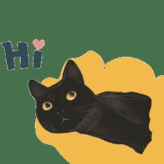 Mia's Black Cat