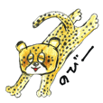 Willful cheetah [Chitata].