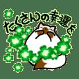 Happy-come-come 2nd-2
