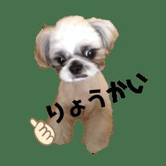 シーズー☆よつばの日記帳3