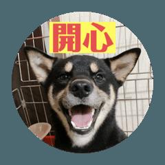 SHI-HAN_20200125211409