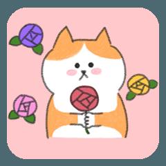 Cat Freddy conveys gentle feelings