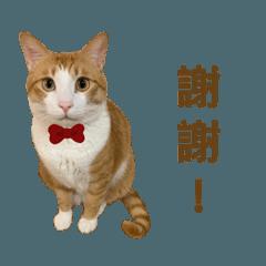Chuan_20200126232501