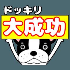 French bulldog buruchan8