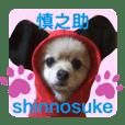 pomeranian shin-chan no.14