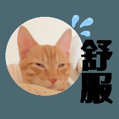 肥貓小肥(ˊ▽ˋ~)