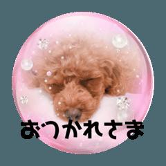 Honobono_20200128165229