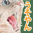 関西弁リアル猫