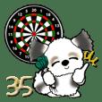 シーズー犬(お誘い・時々ダーツ)35