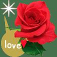 rose1(Japanese)