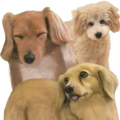 Various kinds of dogs