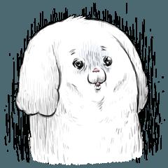 Mofucan dog