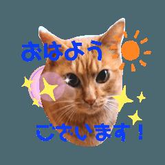 Fukuneko_20200202200453