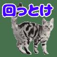 Hyper Cat!3