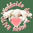 Cute puppy KAITO
