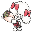 """kawaii"" toy poodle"