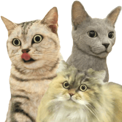Life feeling of many cats
