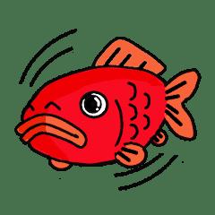 金魚屋が書いた金魚